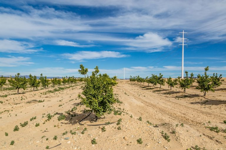 Electricity Water Usage for Sustainable Development on UAE Farms